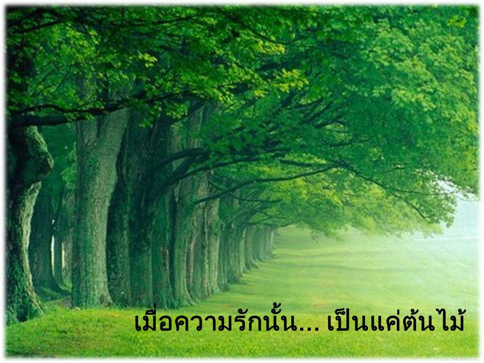 เมื่อความรักนั้น... เป็นแค่ต้นไม้