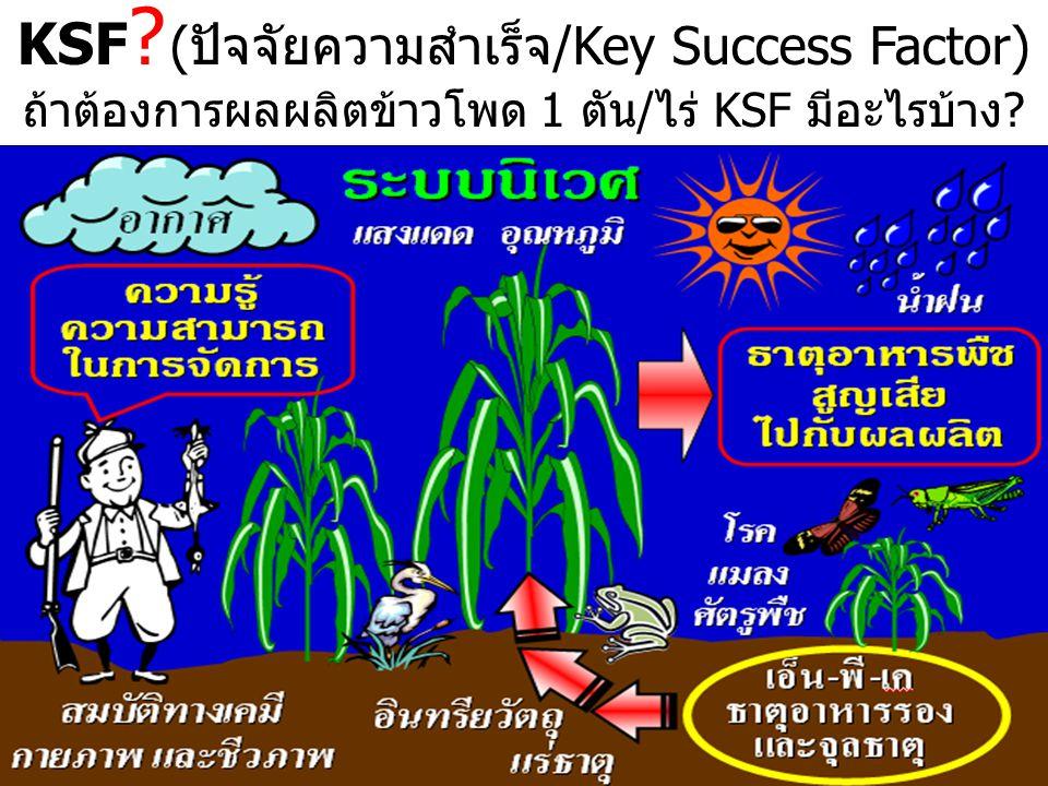 KSF (ปัจจัยความสำเร็จ/Key Success Factor)