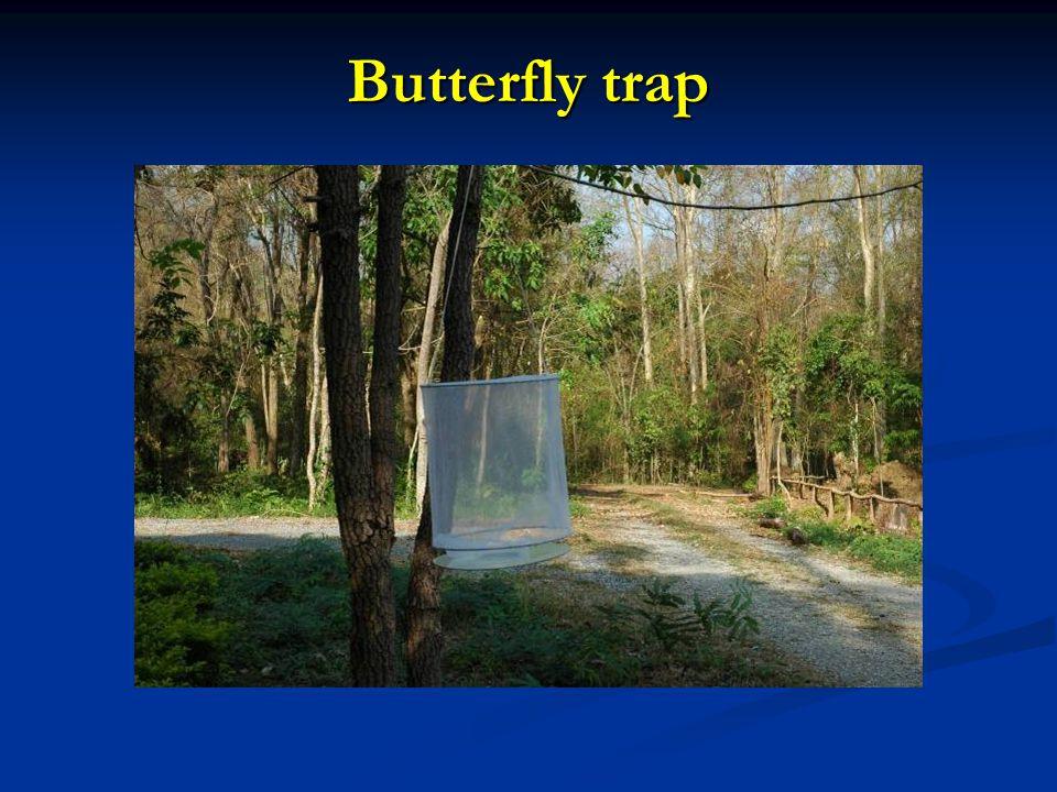 Butterfly trap