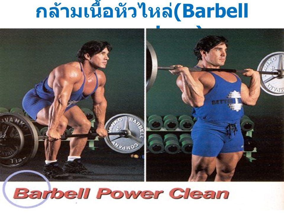 กล้ามเนื้อหัวไหล่(Barbell power clean)