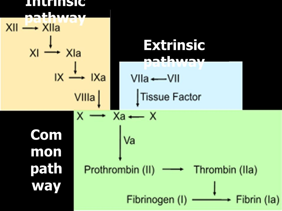 Intrinsic pathway Extrinsic pathway Common pathway