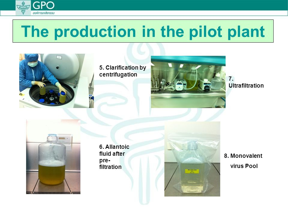 The production in the pilot plant