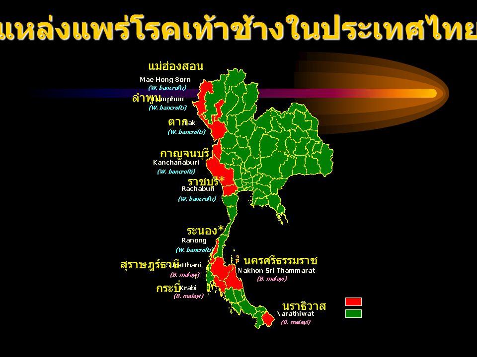 แหล่งแพร่โรคเท้าช้างในประเทศไทย