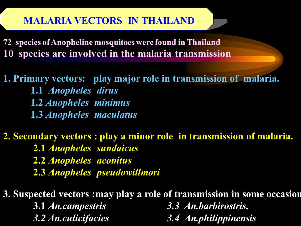 MALARIA VECTORS IN THAILAND