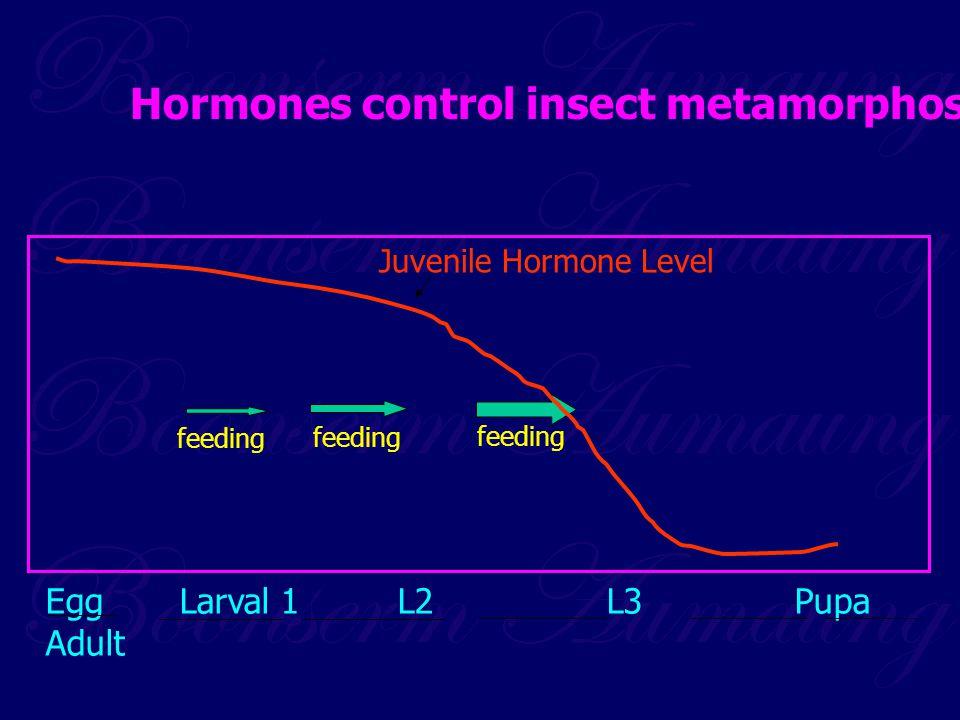 Hormones control insect metamorphosis