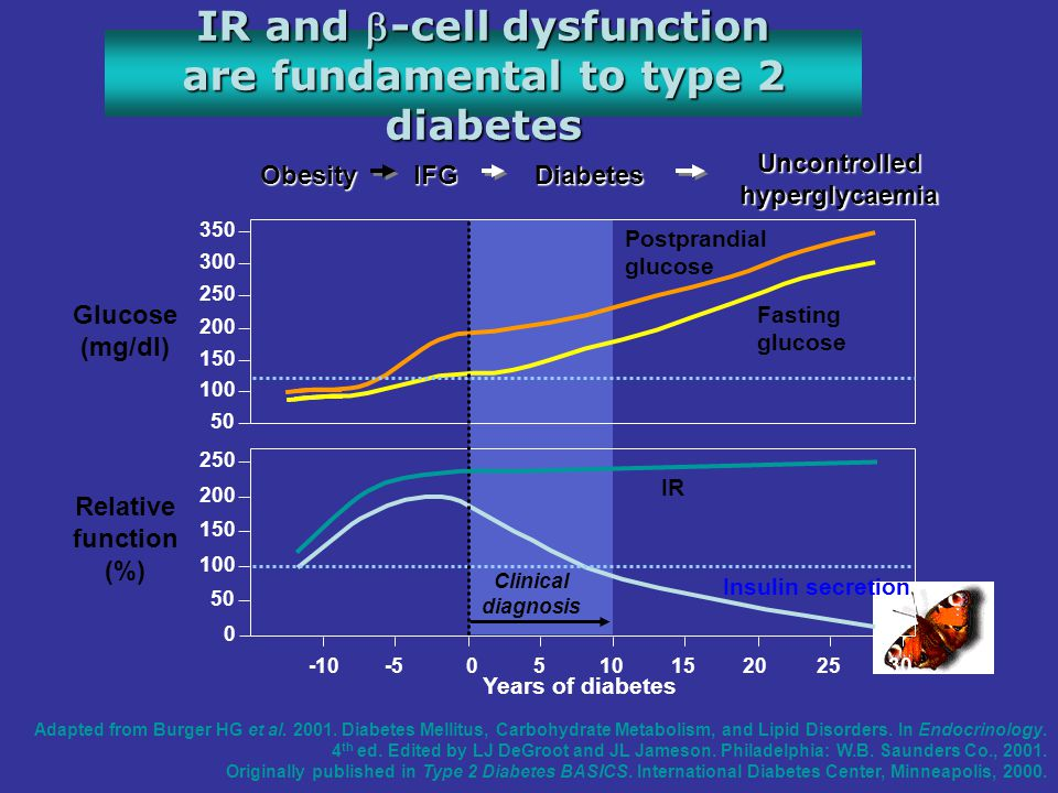 IR and -cell dysfunction are fundamental to type 2 diabetes