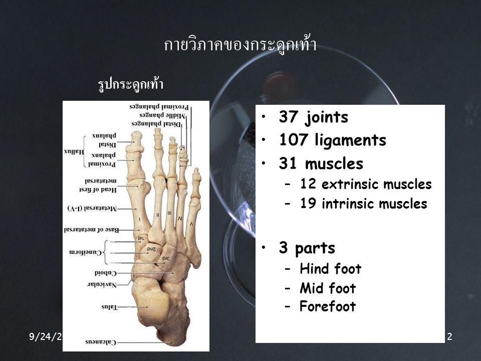กายวิภาคของกระดูกเท้า