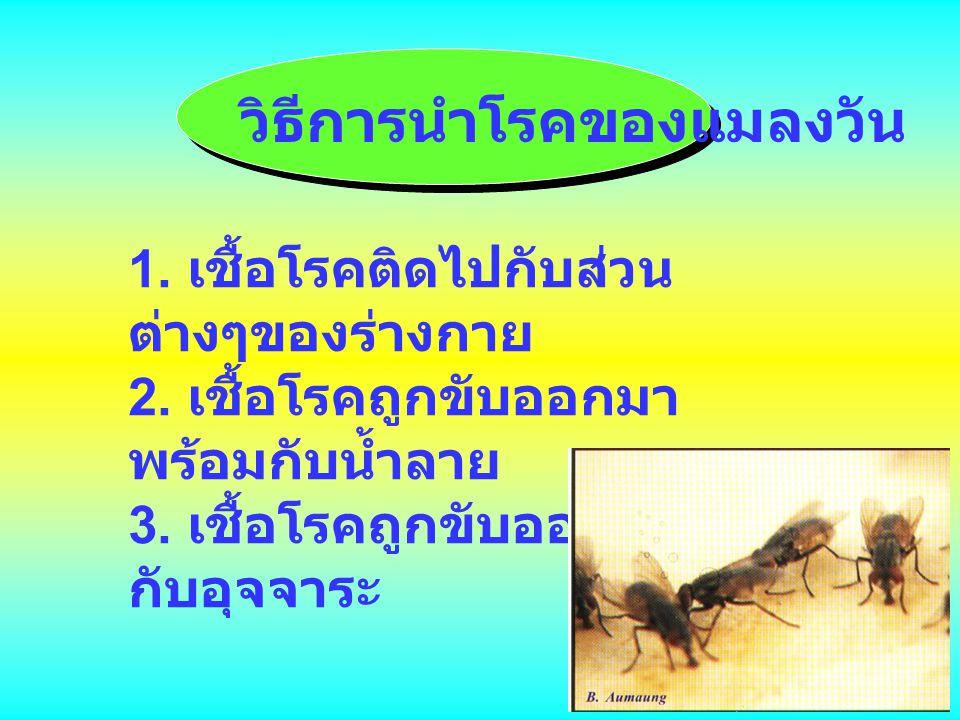 วิธีการนำโรคของแมลงวัน