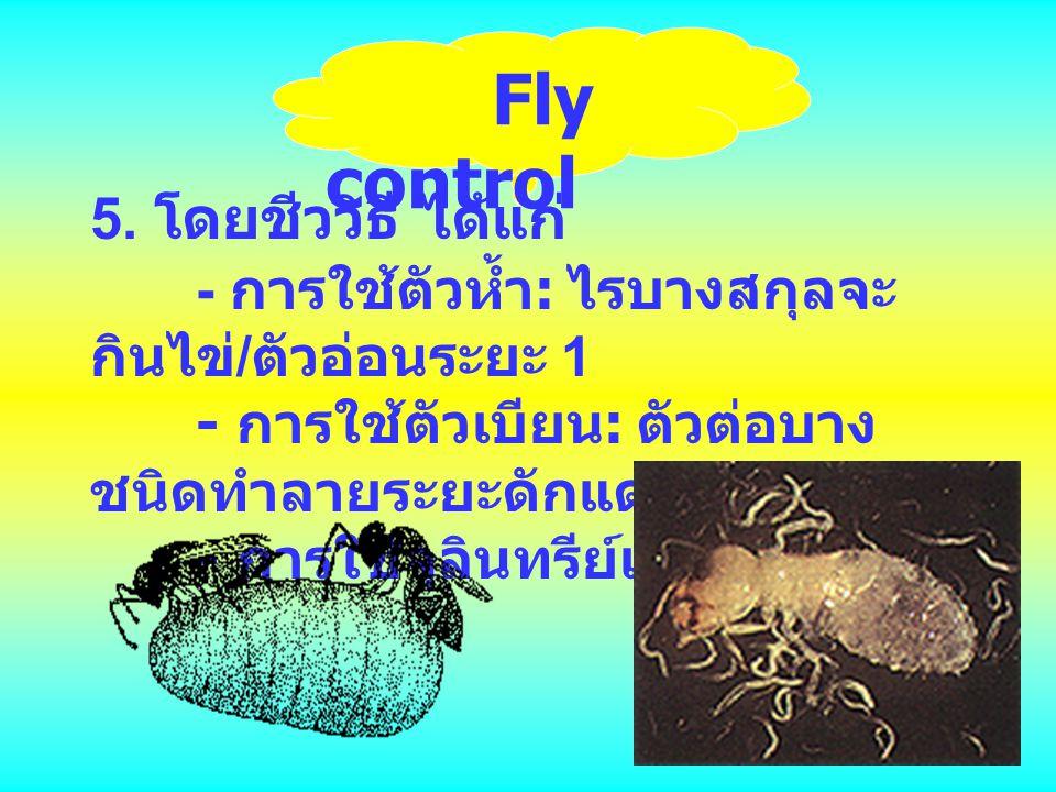 Fly control 5. โดยชีววิธี ได้แก่