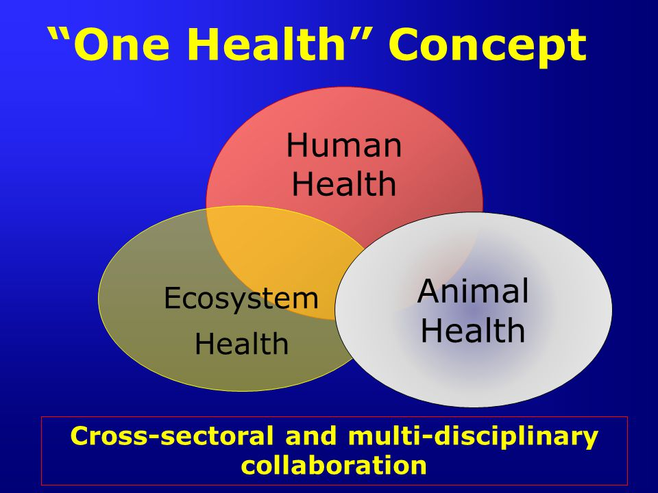 Cross-sectoral and multi-disciplinary