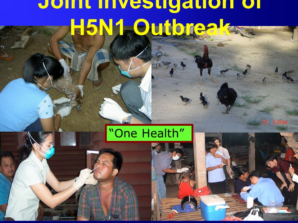 Joint Investigation of H5N1 Outbreak
