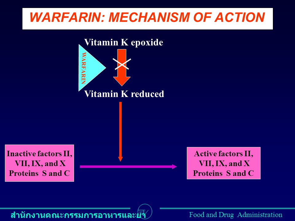 WARFARIN: MECHANISM OF ACTION