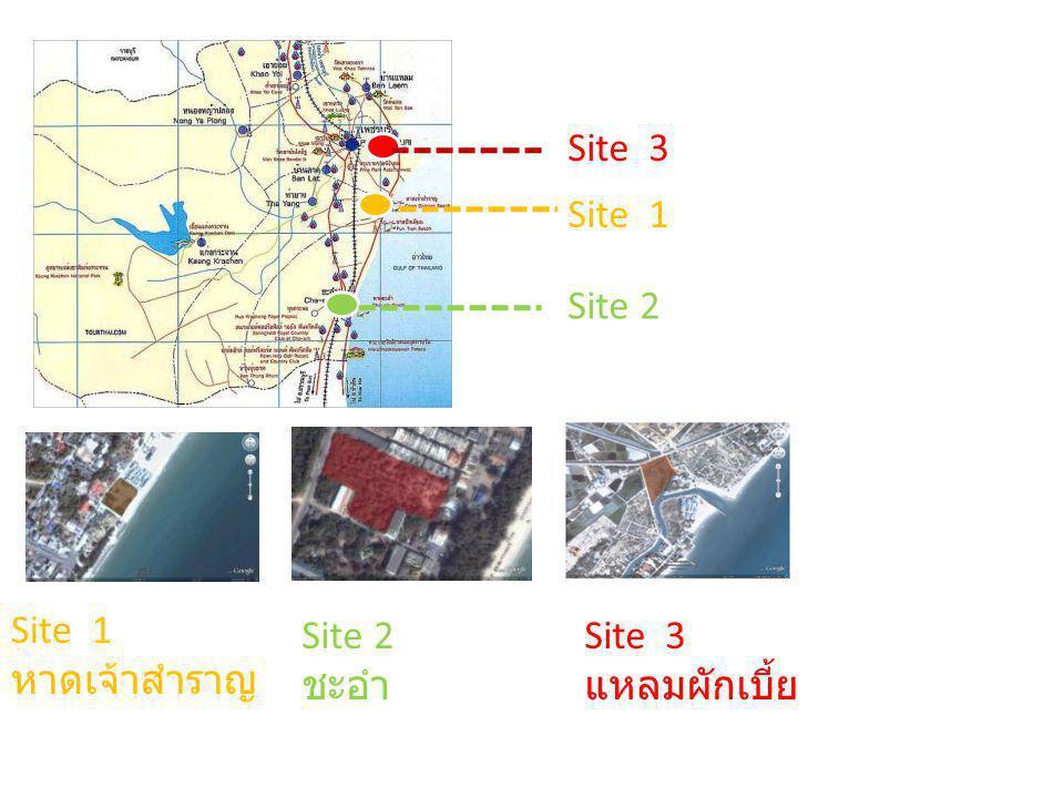Site 3 Site 1 Site 2 Site 1 หาดเจ้าสำราญ Site 2 ชะอำ Site 3 แหลมผักเบี้ย