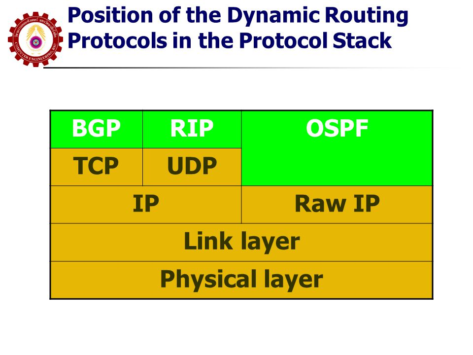 Position of the Dynamic Routing Protocols in the Protocol Stack