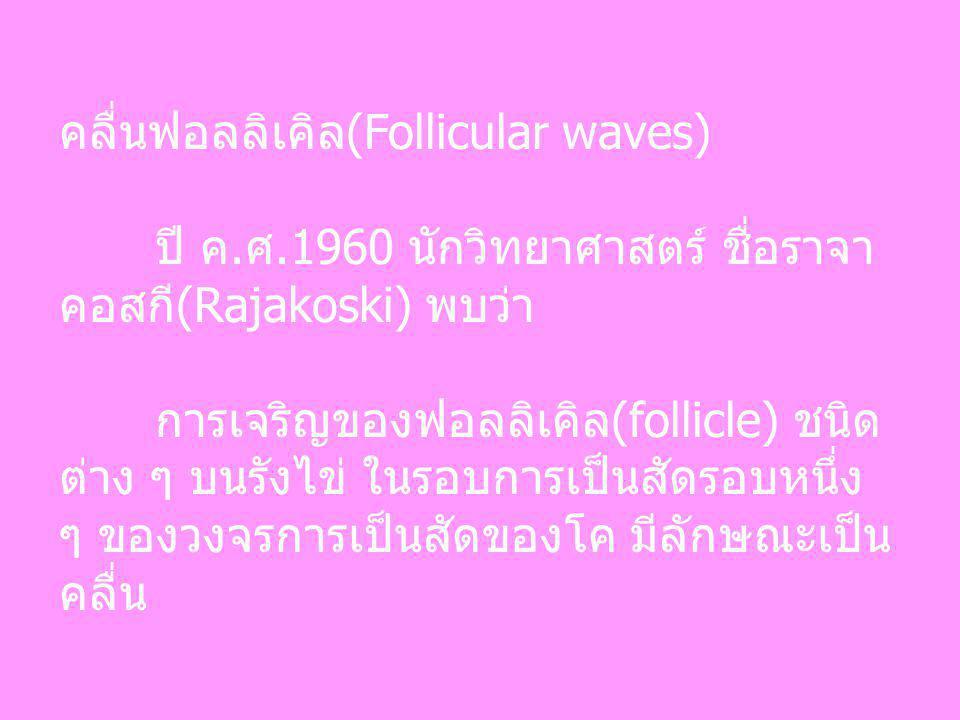 คลื่นฟอลลิเคิล(Follicular waves)
