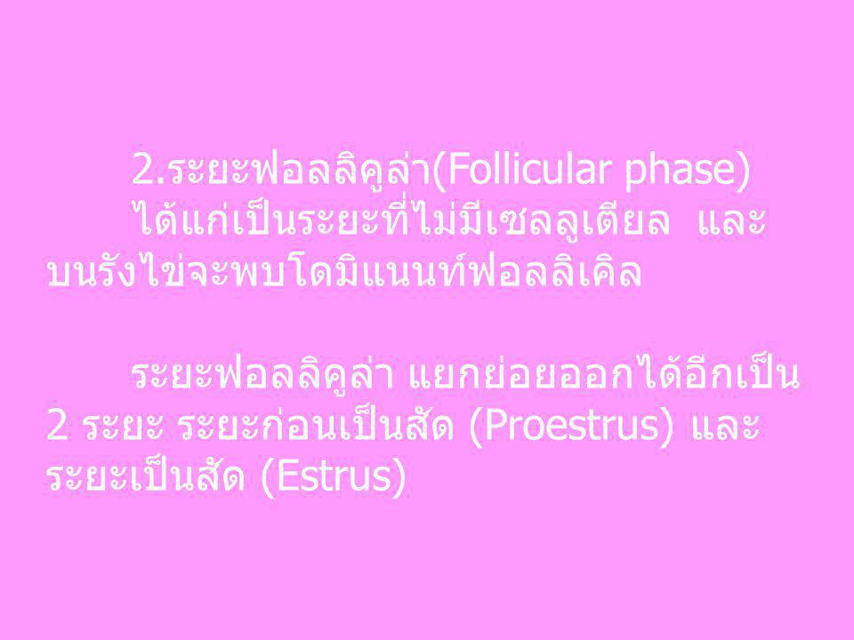 2.ระยะฟอลลิคูล่า(Follicular phase)