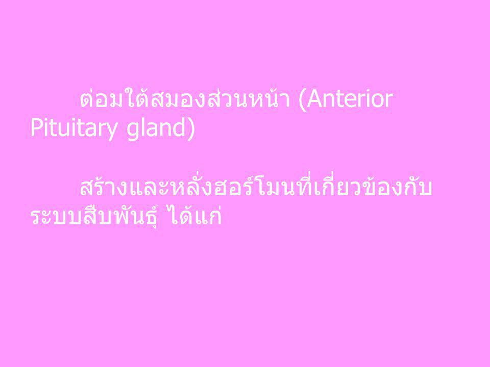 ต่อมใต้สมองส่วนหน้า (Anterior Pituitary gland)