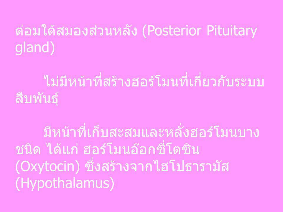 ต่อมใต้สมองส่วนหลัง (Posterior Pituitary gland)