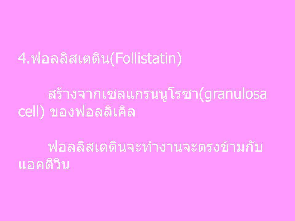 4.ฟอลลิสเตติน(Follistatin)
