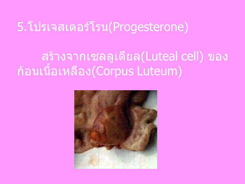 5.โปรเจสเตอร์โรน(Progesterone)