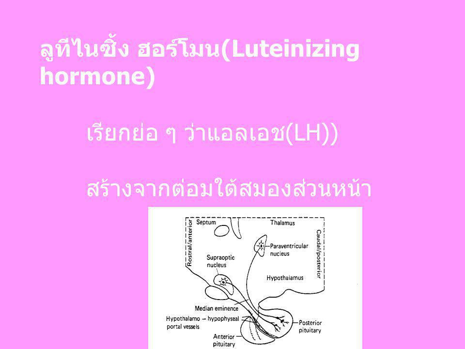 ลูทีไนซิ้ง ฮอร์โมน(Luteinizing hormone)