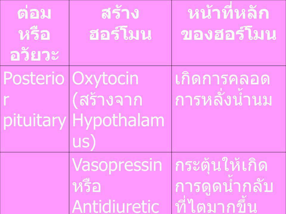 หน้าที่หลักของฮอร์โมน