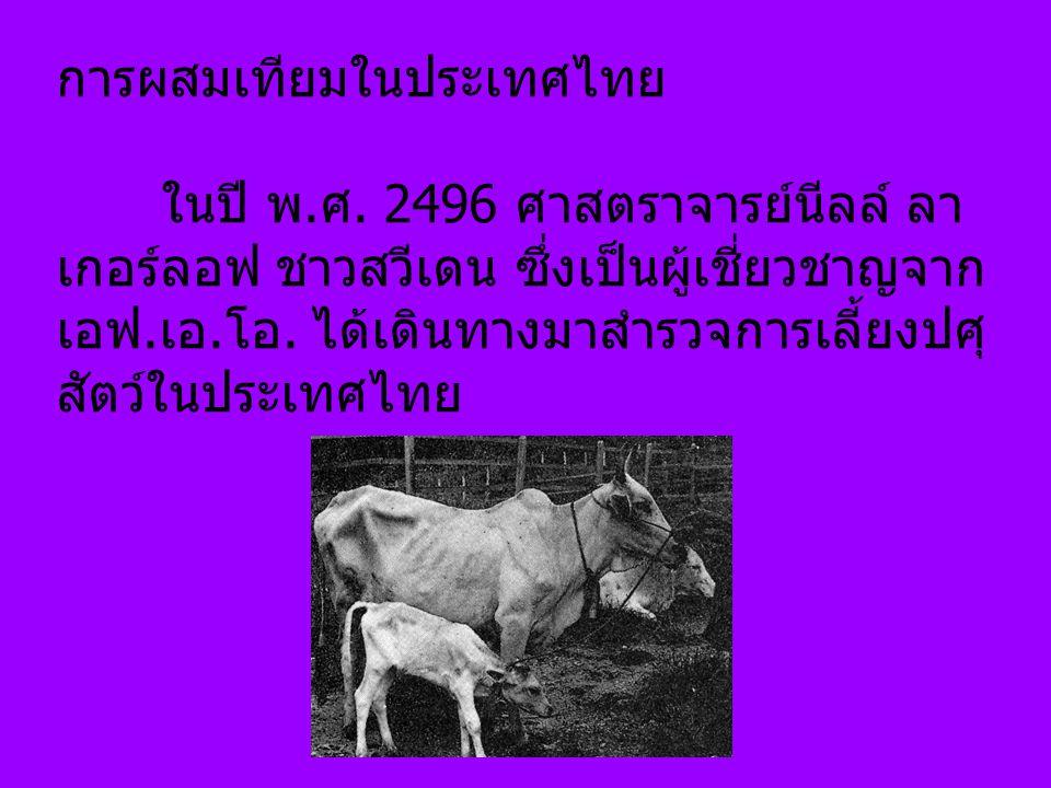 การผสมเทียมในประเทศไทย