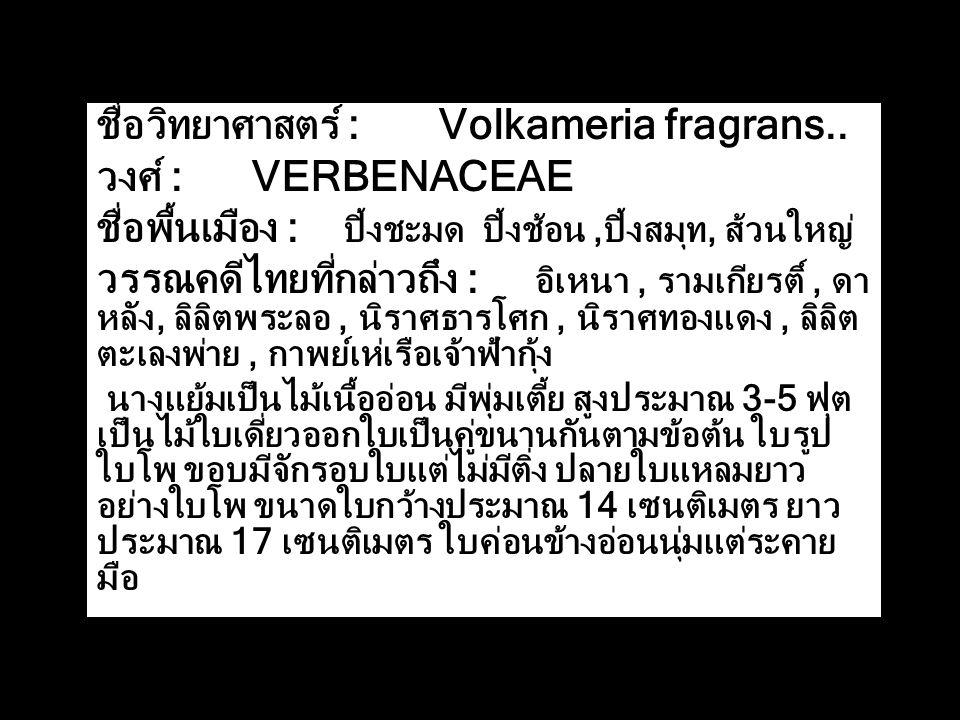ชื่อวิทยาศาสตร์ : Volkameria fragrans.. วงศ์ : VERBENACEAE