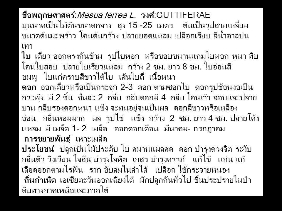 ชื่อพฤกษศาสตร์:Mesua ferrea L. วงศ์:GUTTIFERAE