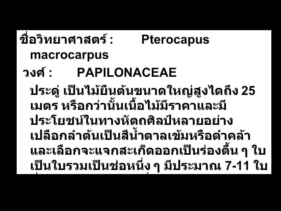 ชื่อวิทยาศาสตร์ : Pterocapus macrocarpus
