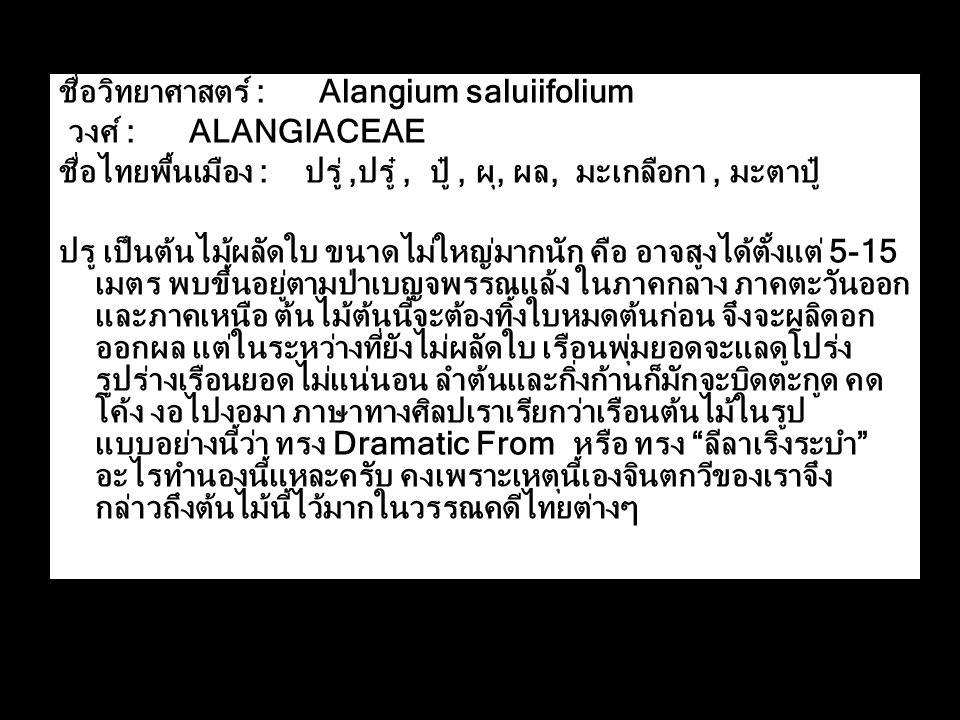 ชื่อวิทยาศาสตร์ : Alangium saluiifolium
