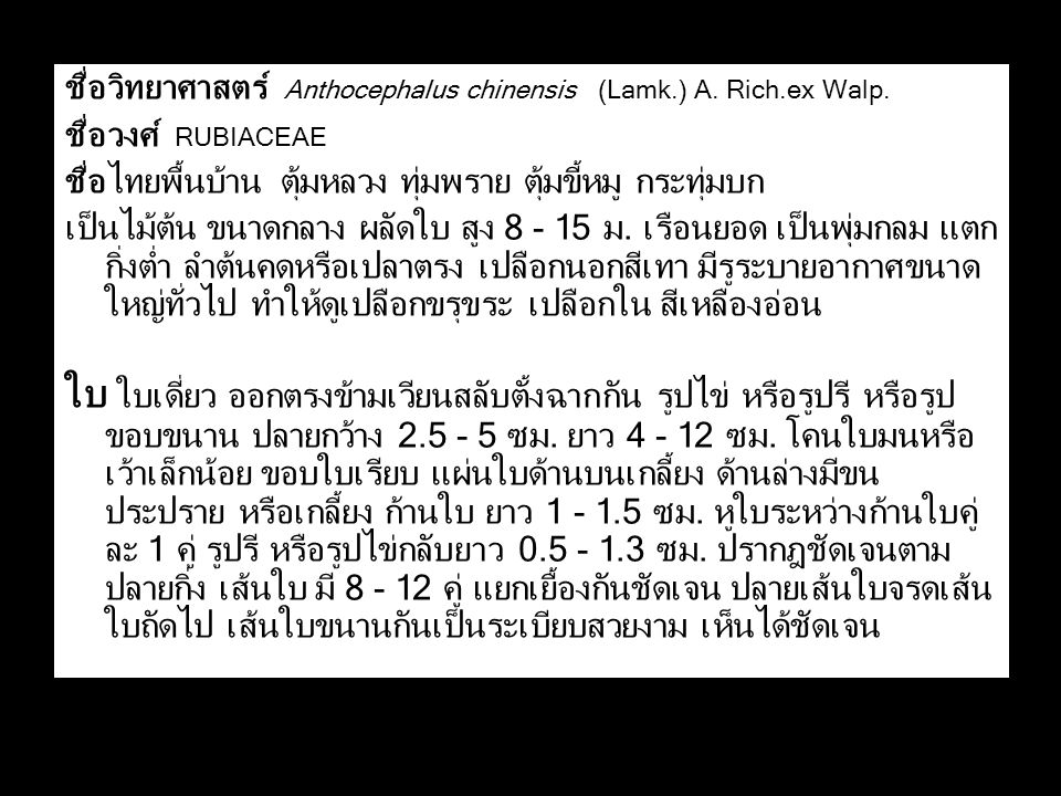 ชื่อวิทยาศาสตร์ Anthocephalus chinensis (Lamk.) A. Rich.ex Walp.