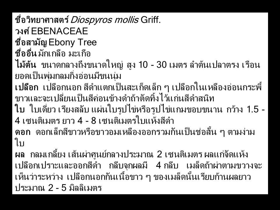 ชื่อวิทยาศาสตร์ Diospyros mollis Griff.