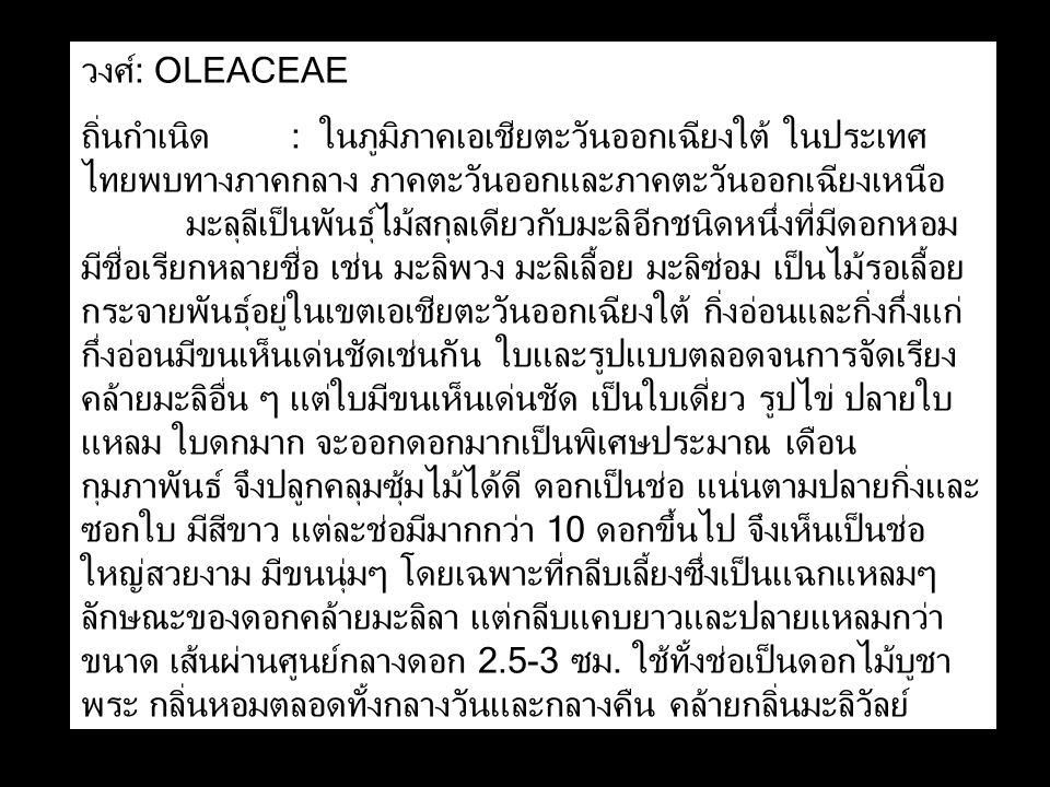 วงศ์: OLEACEAE