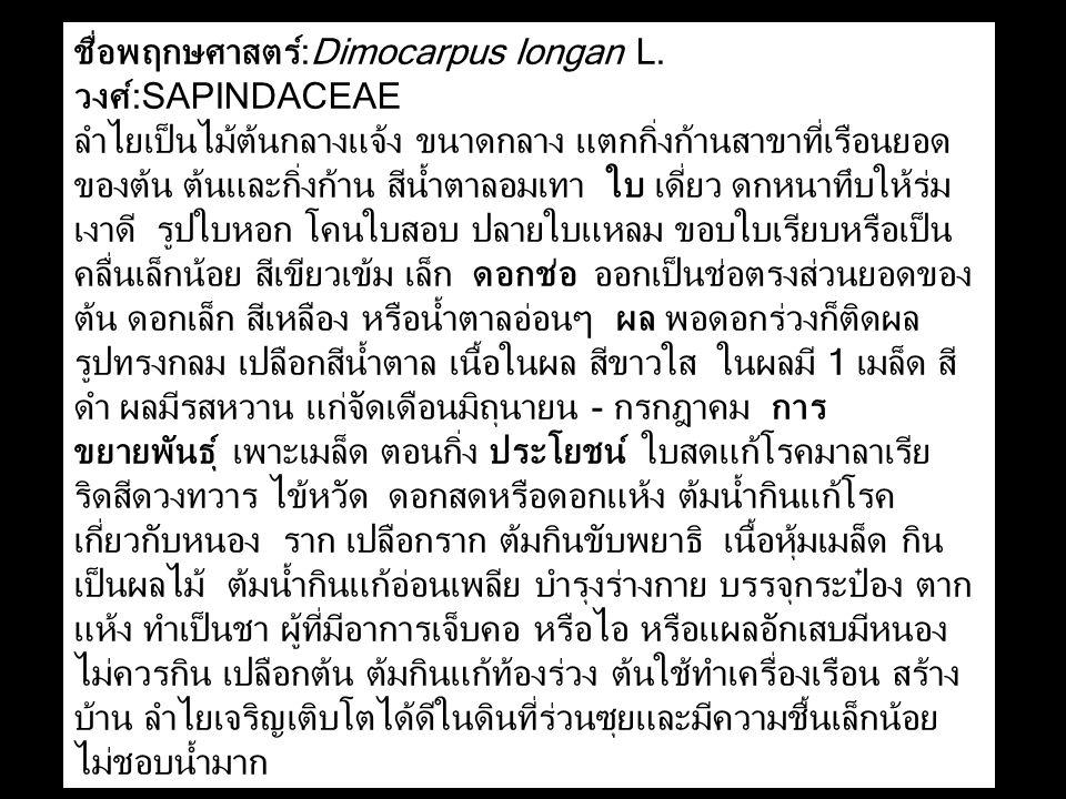 ชื่อพฤกษศาสตร์:Dimocarpus longan L. วงศ์:SAPINDACEAE