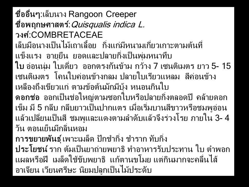 ชื่ออื่นๆ:เล็บนาง Rangoon Creeper