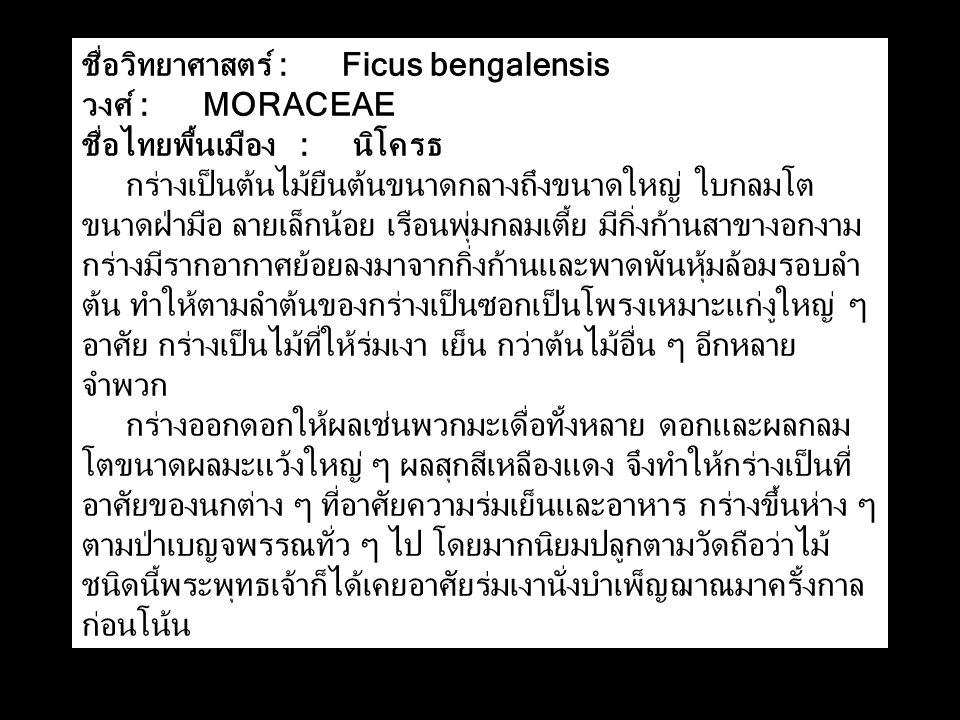 ชื่อวิทยาศาสตร์ : Ficus bengalensis