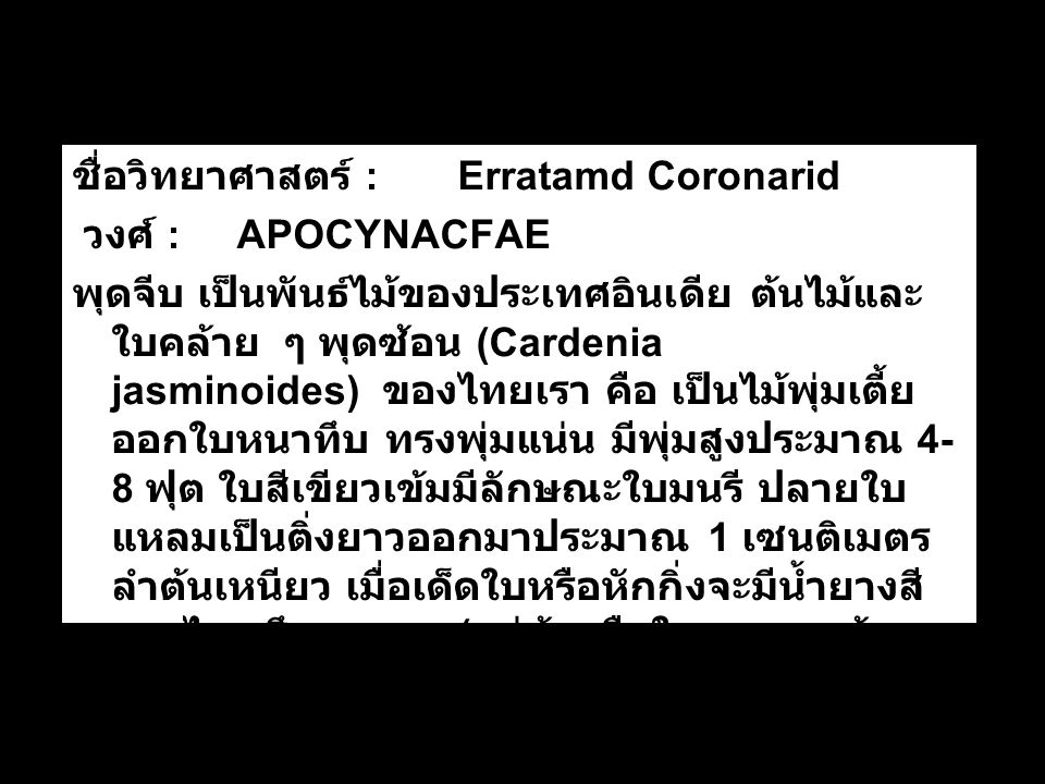ชื่อวิทยาศาสตร์ : Erratamd Coronarid