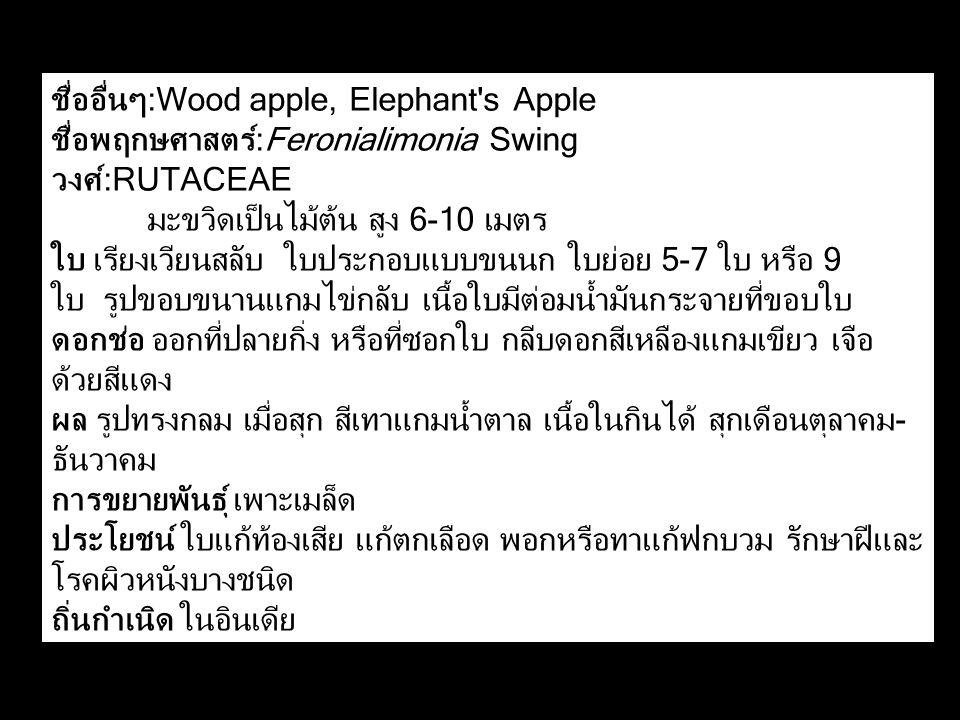 ชื่ออื่นๆ:Wood apple, Elephant s Apple