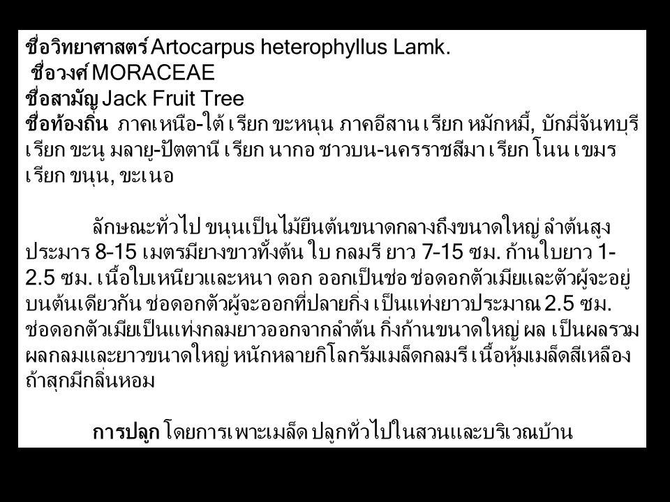 ชื่อวิทยาศาสตร์ Artocarpus heterophyllus Lamk.