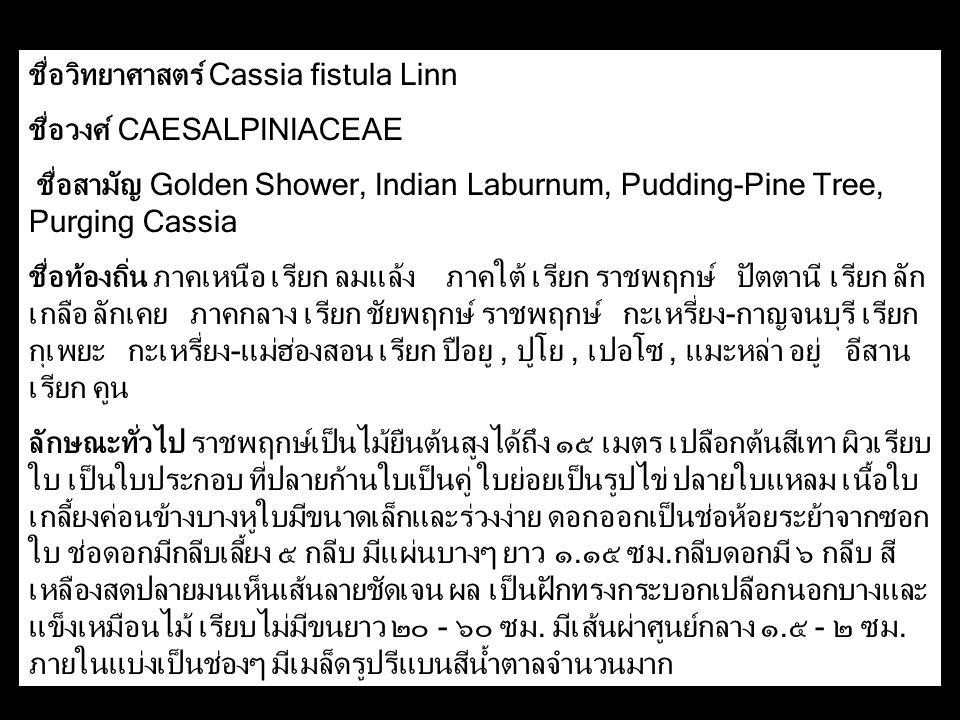 ชื่อวิทยาศาสตร์ Cassia fistula Linn