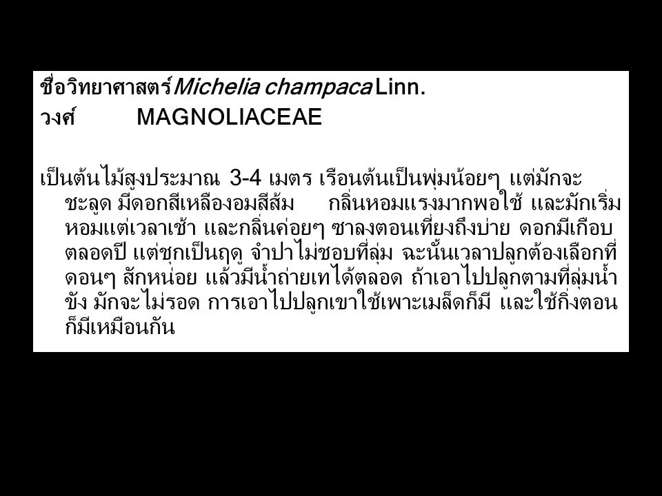 ชื่อวิทยาศาสตร์ Michelia champaca Linn.
