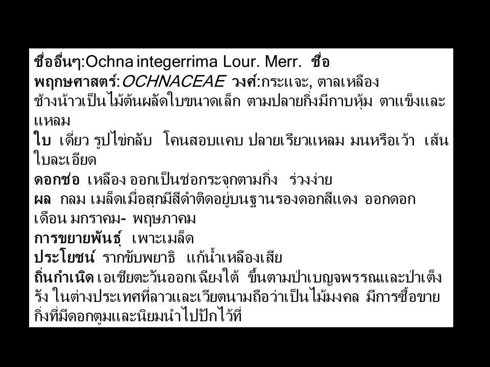 ชื่ออื่นๆ:Ochna integerrima Lour. Merr