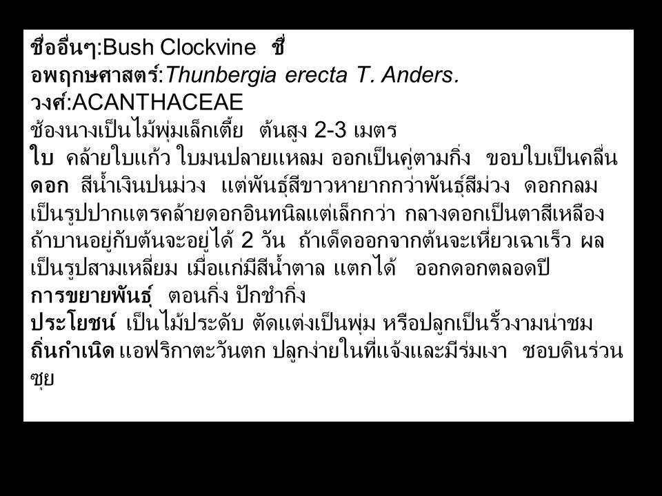ชื่ออื่นๆ:Bush Clockvine ชื่