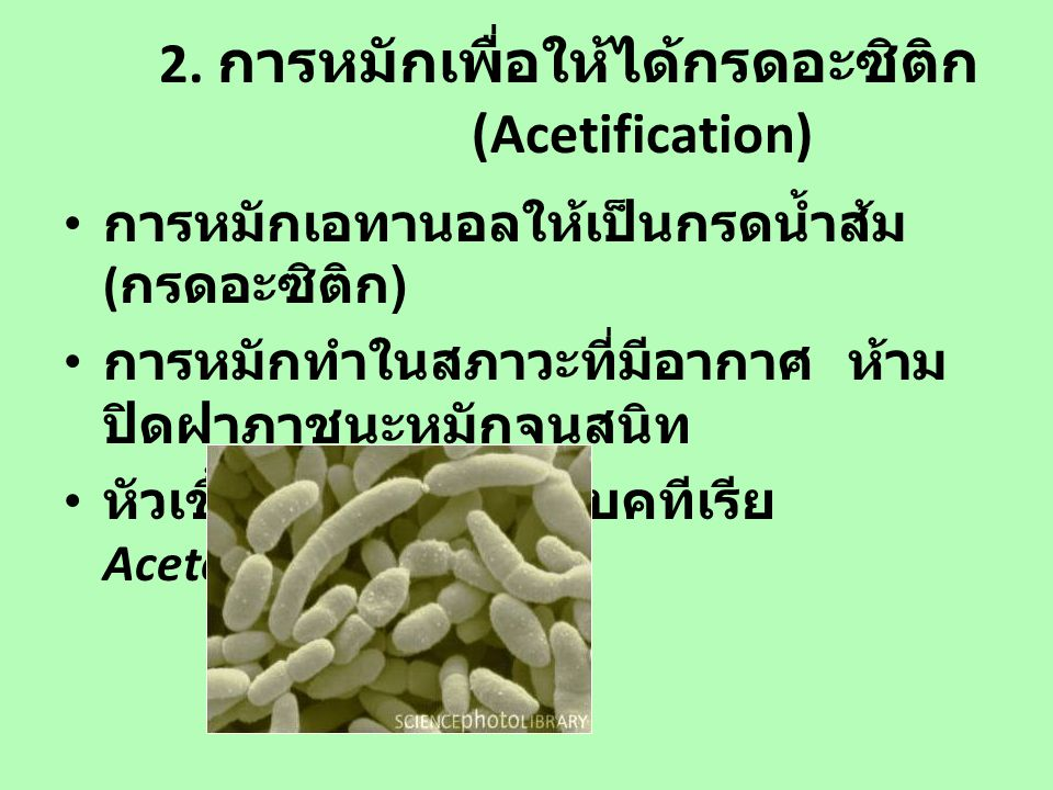 2. การหมักเพื่อให้ได้กรดอะซิติก (Acetification)