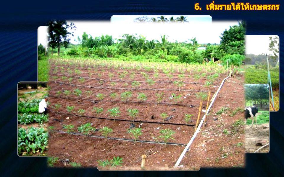 6. เพิ่มรายได้ให้เกษตรกร