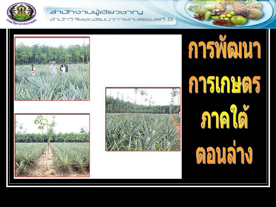 การพัฒนา การเกษตร ภาคใต้ ตอนล่าง