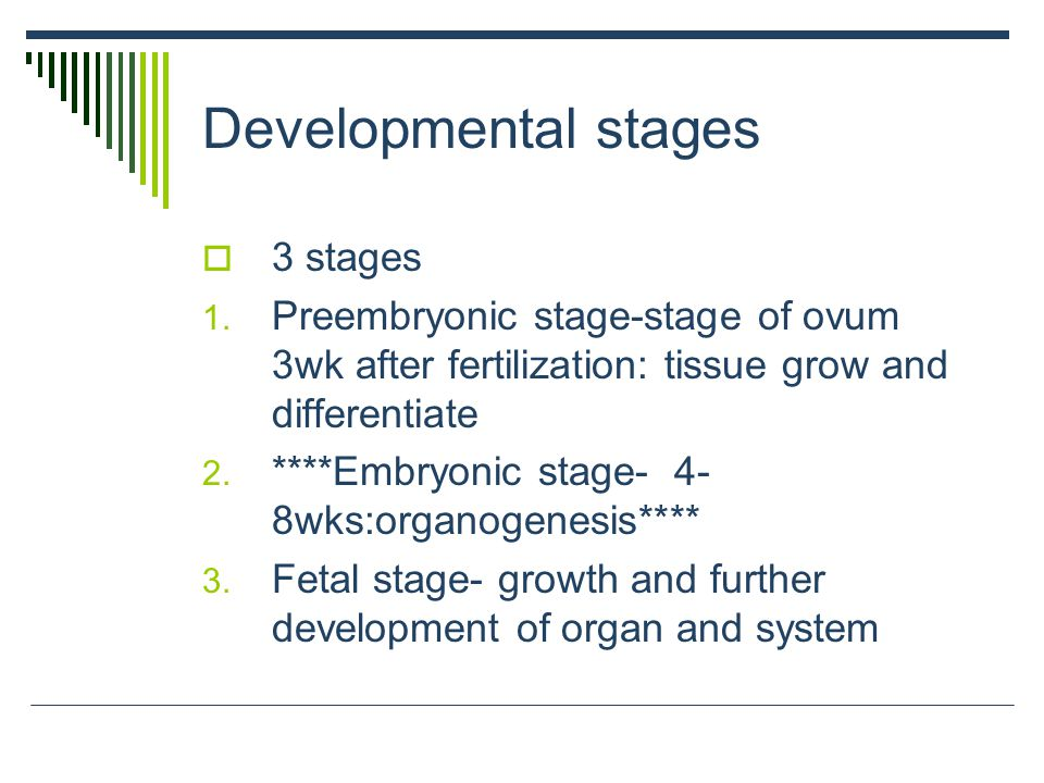 Developmental stages 3 stages