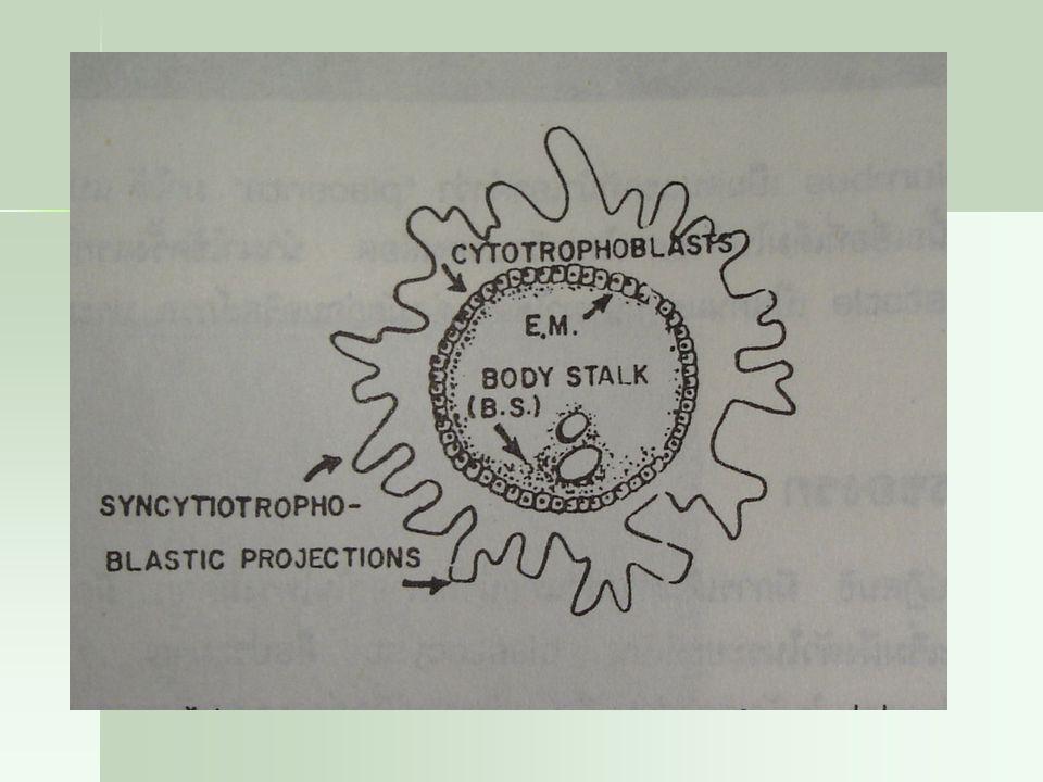 EM=extraembryonic mesoderm