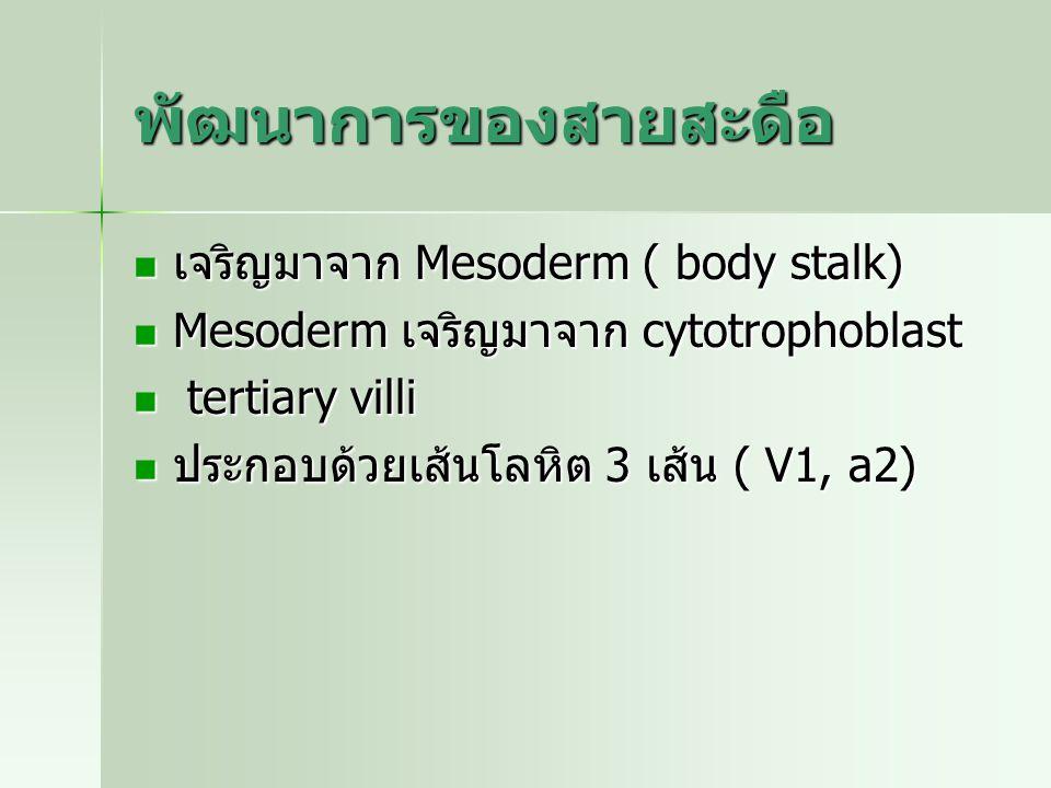 พัฒนาการของสายสะดือ เจริญมาจาก Mesoderm ( body stalk)